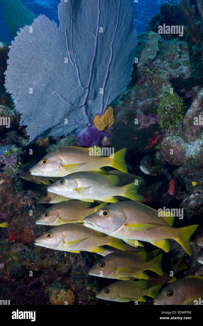 Little Cayman Coral Reef Stockfotos & Little Cayman Coral Reef ...