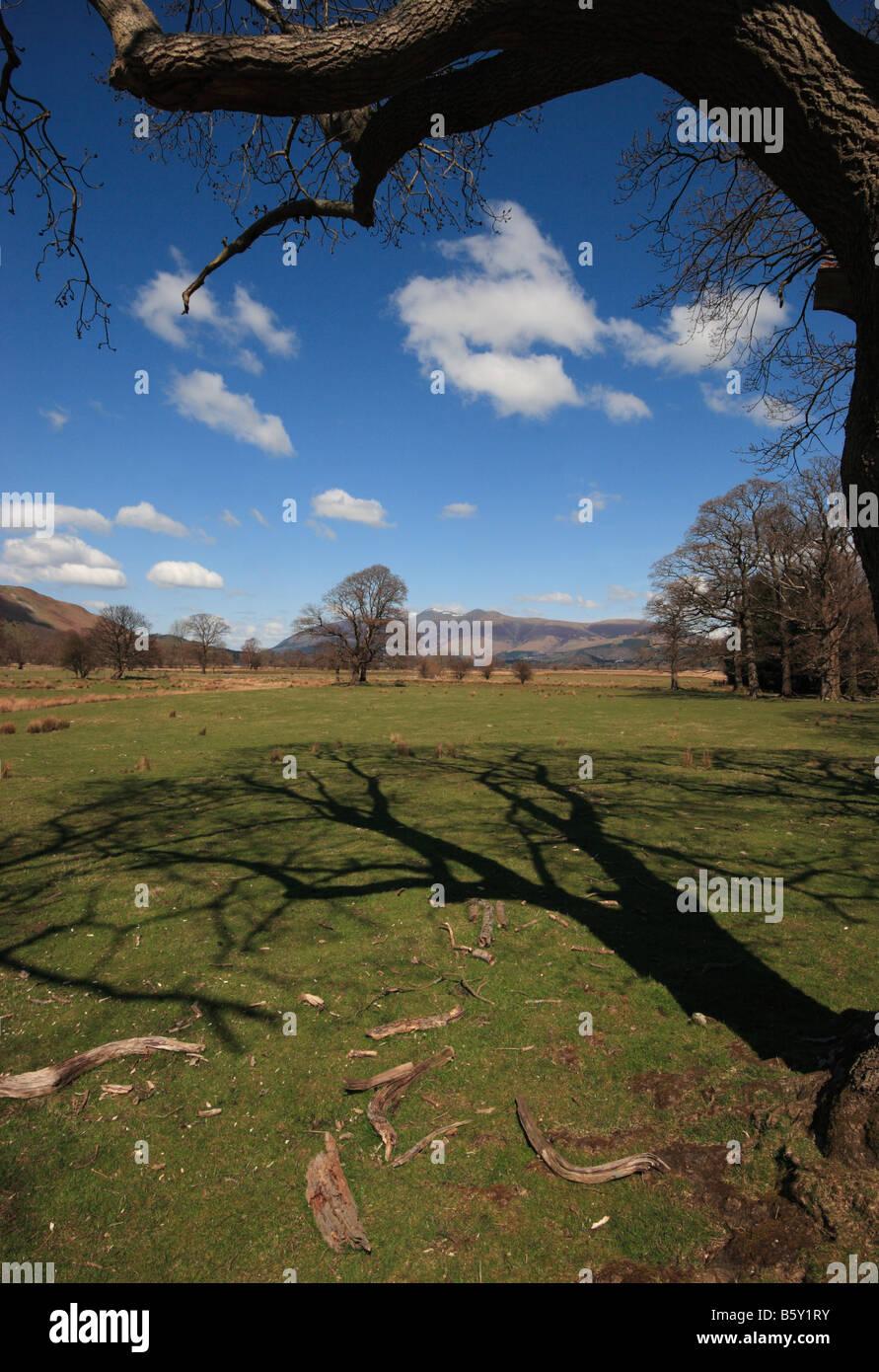 Ein Baum wirft einen langen Schatten, mit Ablagerungen im Vordergrund und Cumbrian Fells im Hintergrund, England, Stockbild