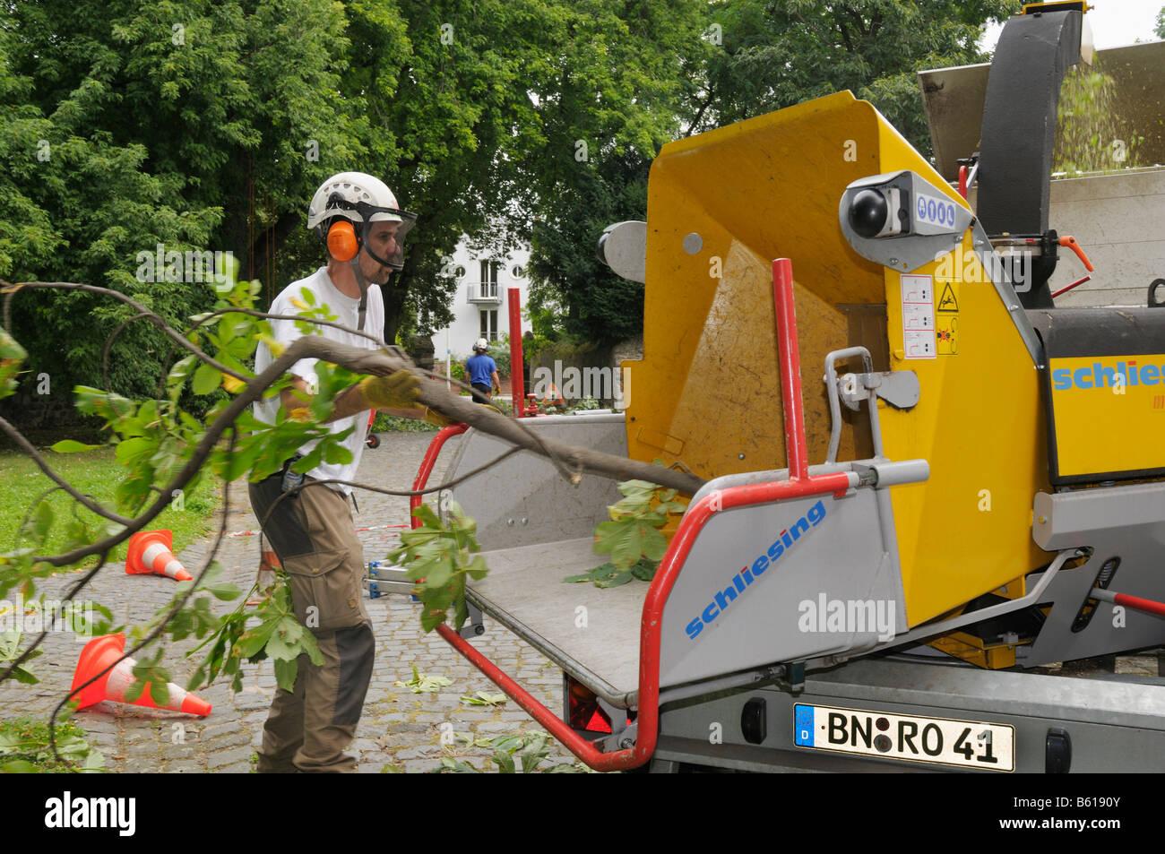 Baumpfleger tragen von Sicherheitskleidung schob eine Verzweigung in einen Schredder Stockbild