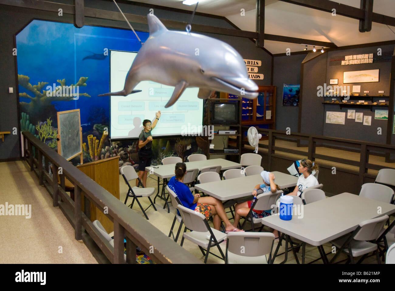 Schülerinnen und Schüler im Musée Delfin Lektion über den Umgang mit Haien und Delfinen in Natur, Stockbild
