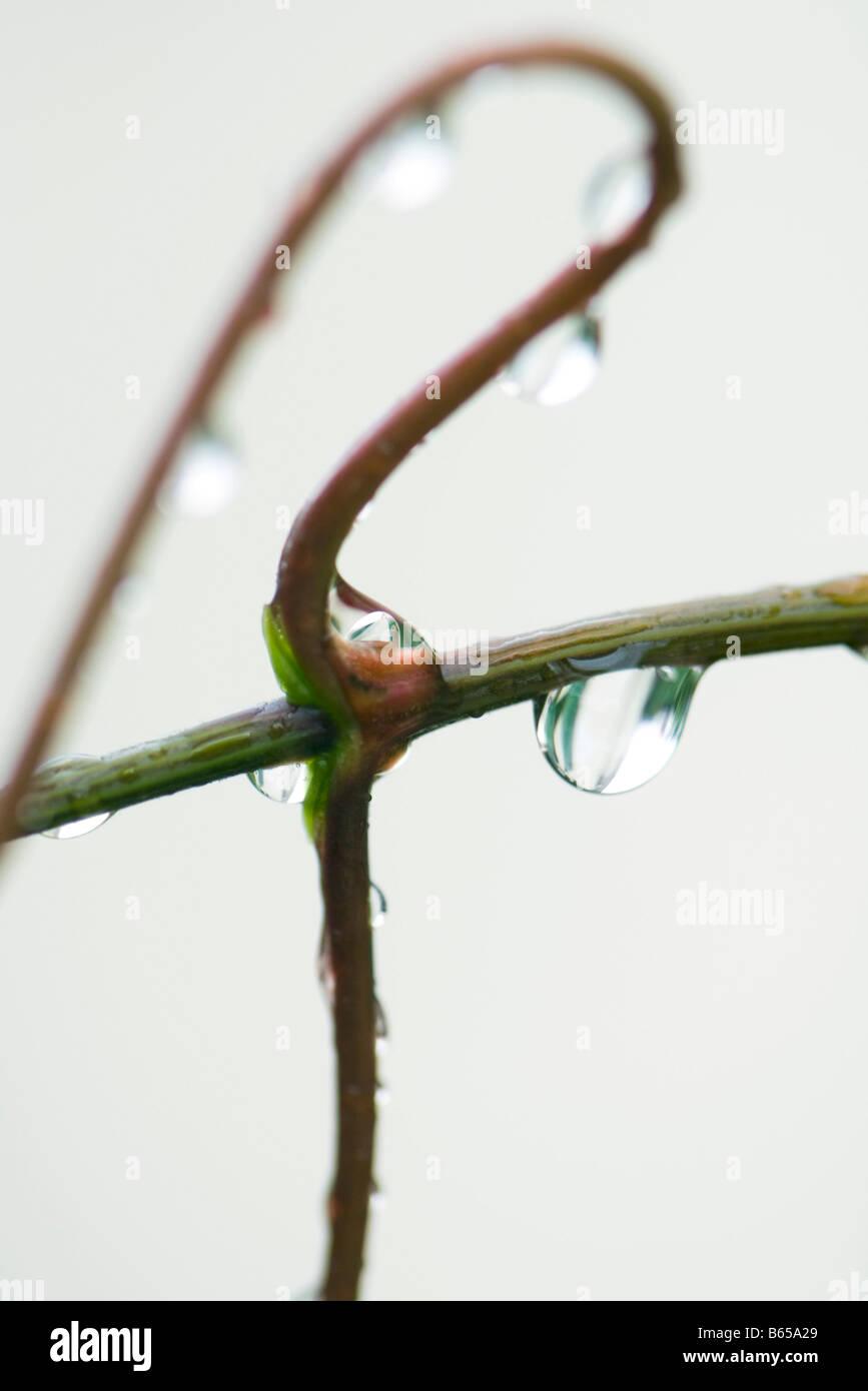Regentropfen auf Stamm, Nahaufnahme Stockbild