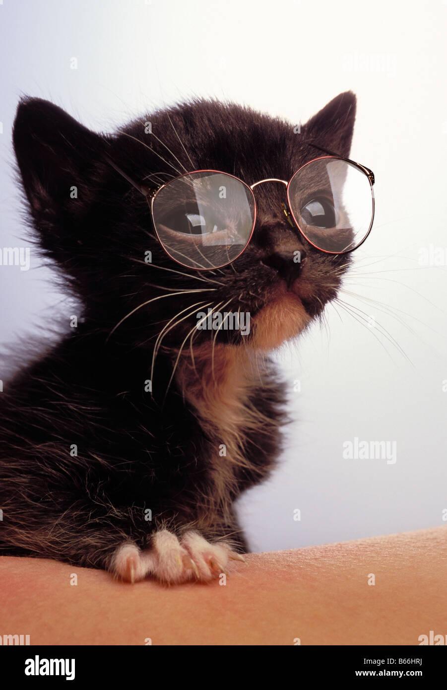 Kätzchen tragen Brillen Stockbild