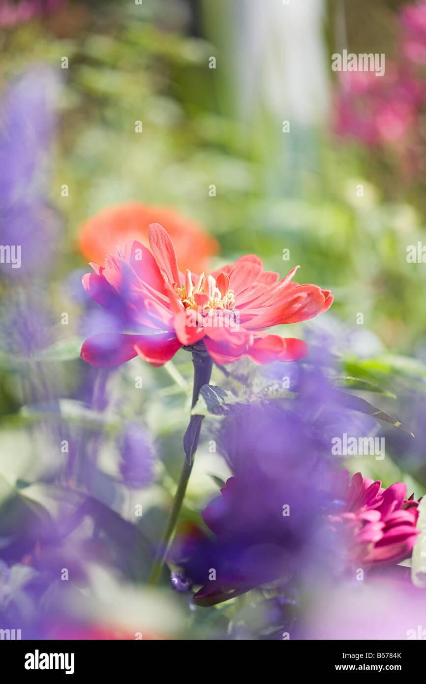 Nahaufnahme von Blumen Stockbild