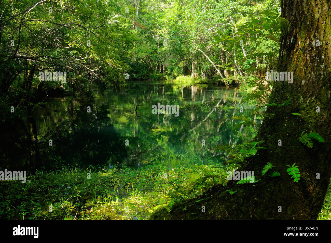 Markus s Fluss Florida Stockbild
