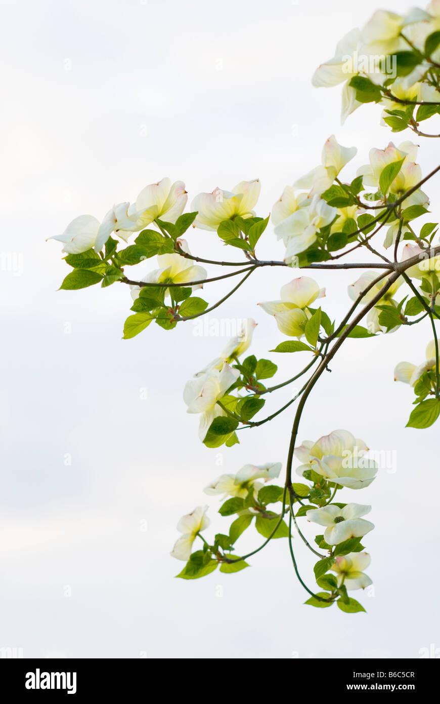 flowering season stockfotos flowering season bilder alamy. Black Bedroom Furniture Sets. Home Design Ideas