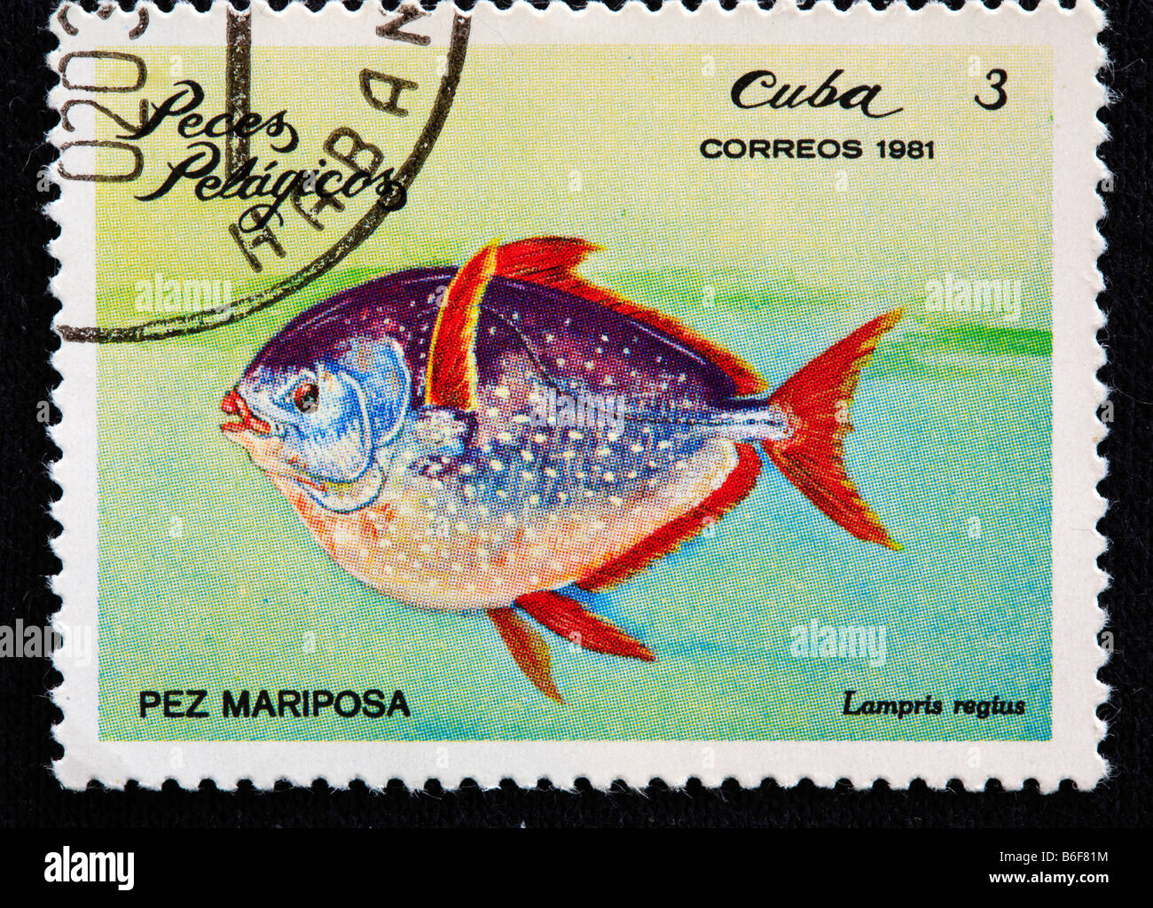 Opah Moonfish, Sonnenbarsch, Kingfish, Jerusalem Schellfisch (Lampris Guttatus), Briefmarke, Kuba, 1981 Stockfoto