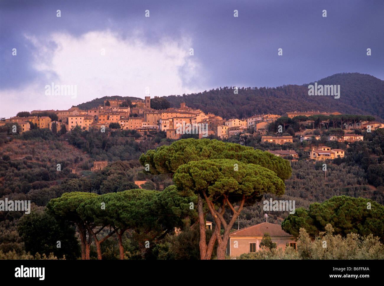 Castagneto Carducci, Livorno Provinz, Toskana, Italien, Europa Stockbild