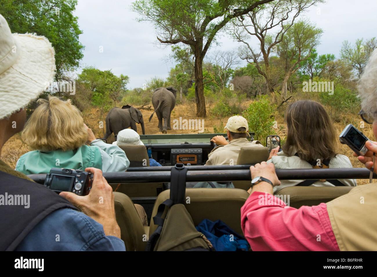 Pirschfahrt Abenteuer Südafrika Jeep Fahrzeug Menschen SAFARI Auto Bus Kleinbus Süd-Afrika Elefant Kreuzung Stockbild