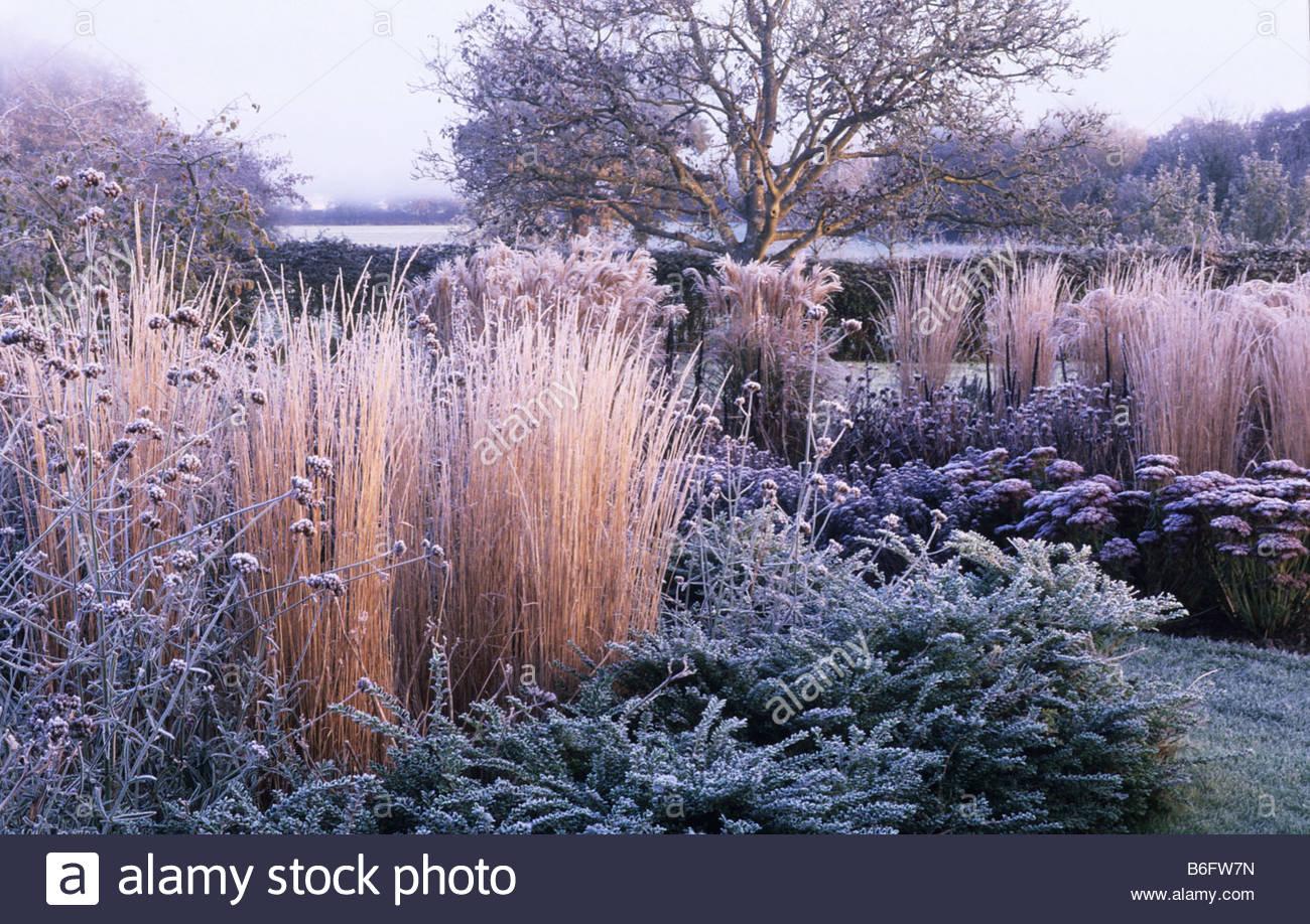 privater garten sussex design fiona lawrenson gr ser und stauden im winter frost januar. Black Bedroom Furniture Sets. Home Design Ideas