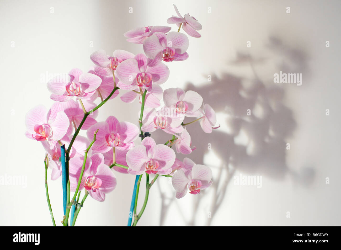 Lila Orchidee Blume Stockbild