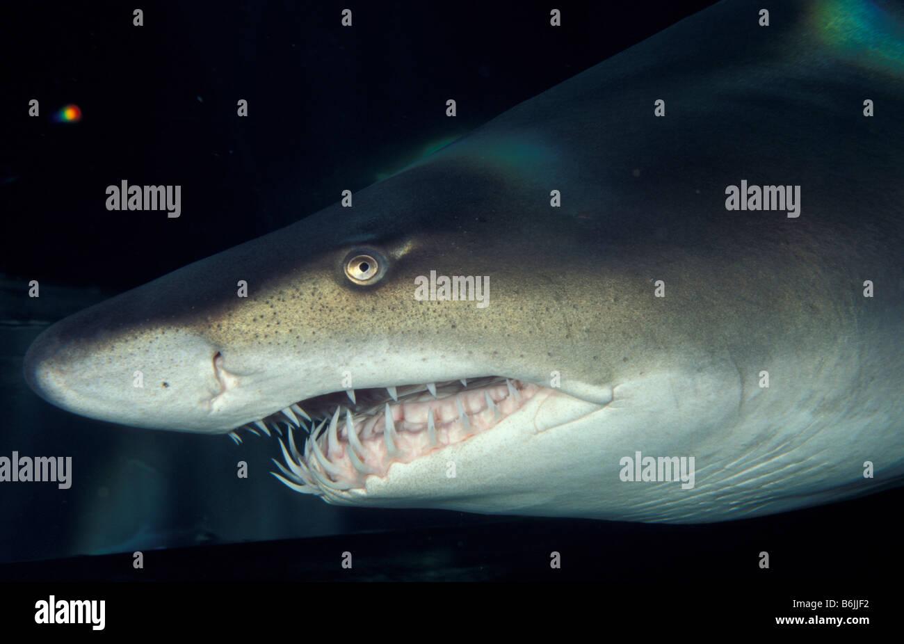 Großzügig Große Weiße Hai Färbung Seite Bilder - Entry Level Resume ...