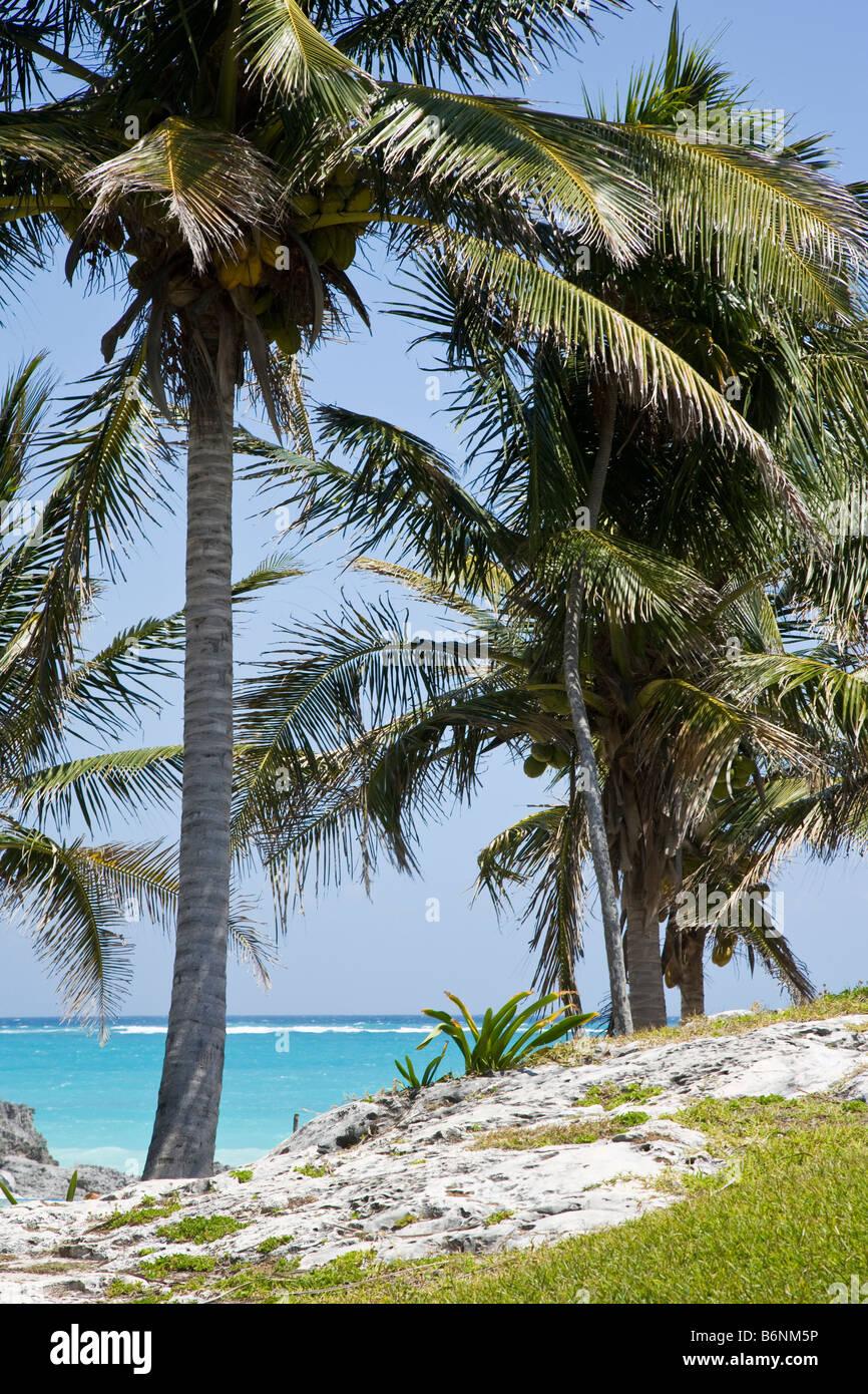 Karibisches Meer und Palmen in Tulum Yucatan Mexiko Stockbild