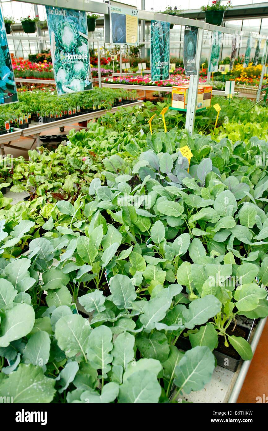 Garten-Center. Luchon. Frankreich. Gemüse-Setzlinge Stockbild