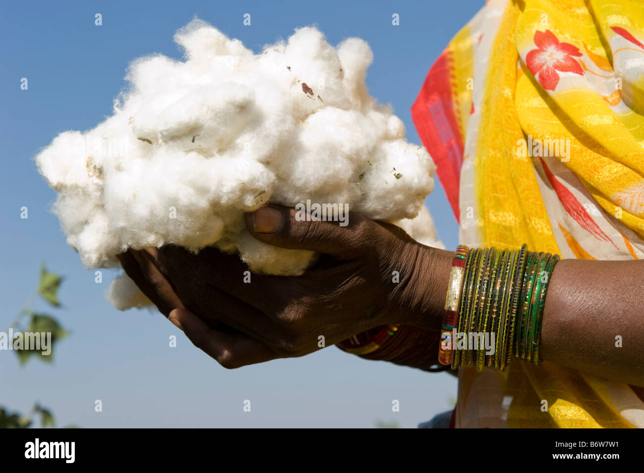 Indien M.P. Khargone, Fair Trade und Bio-Baumwolle Landwirtschaft Stockbild