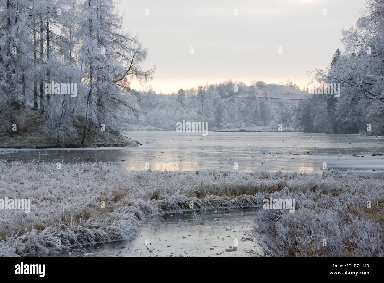 Hoare Frost auf Vegetation und eine gefrorene Tarn Hows in den Lake District Cumbria UK Stockbild