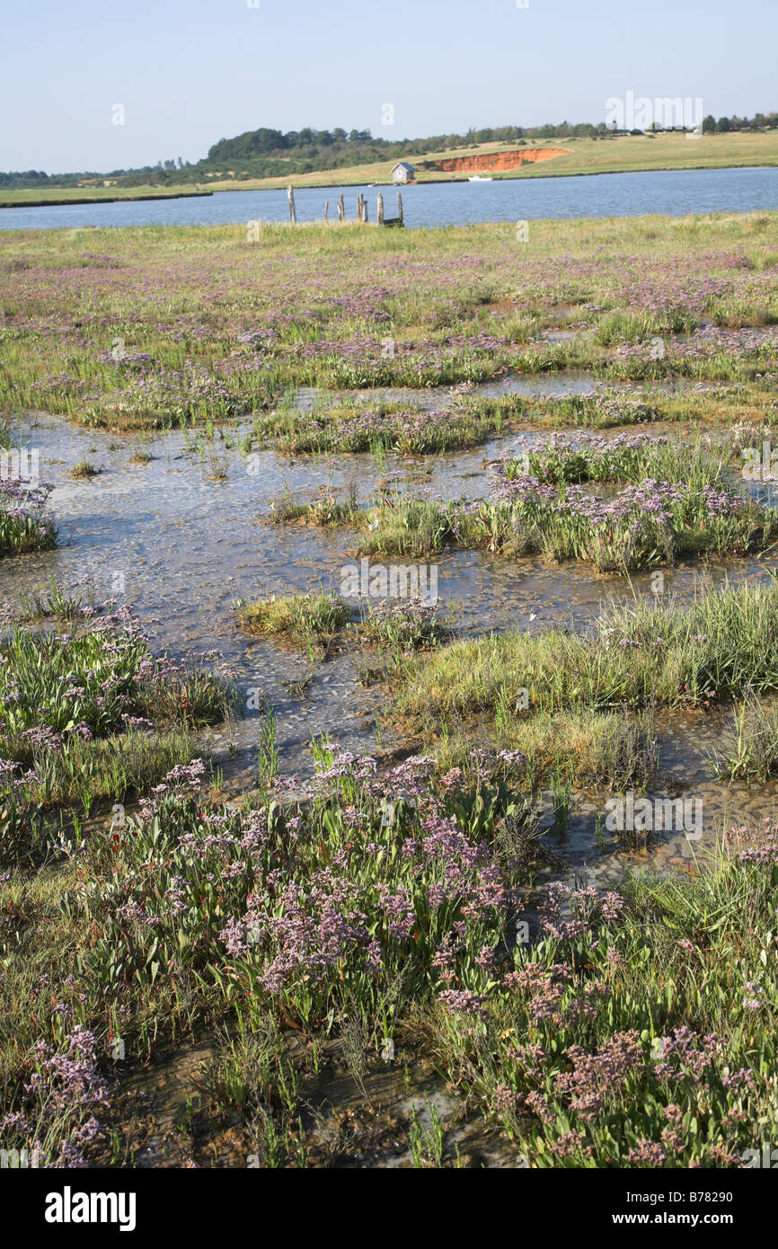 Marschland und Gezeiten-Fluss Butley Creek Butley Suffolk England Stockbild