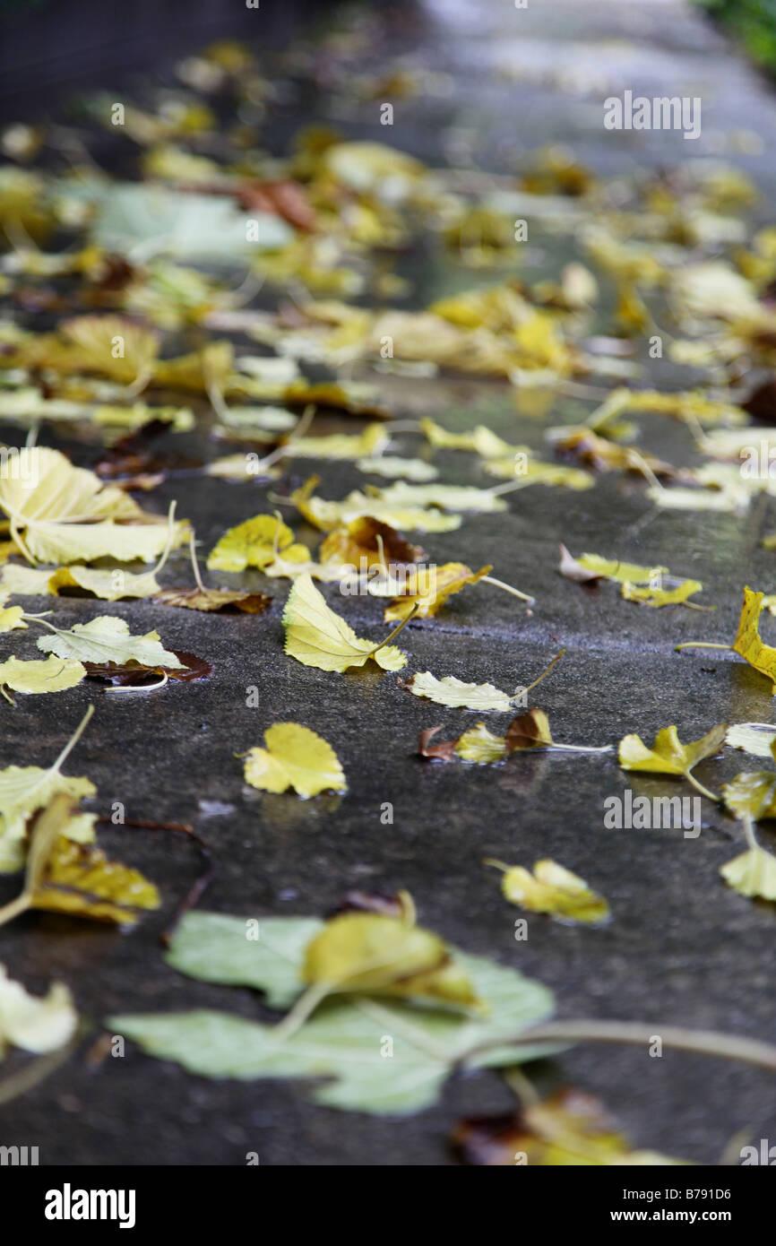 Blätter auf nassen verregneten Bürgersteig Stockbild