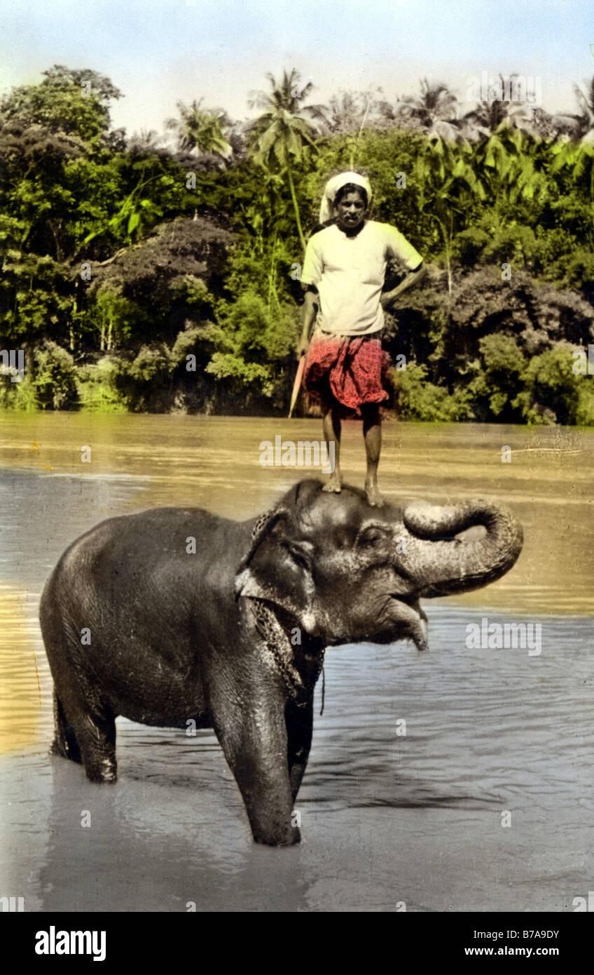 Historisches Foto, indische Person auf Elefanten, Indien, ca. 1910 Stockbild