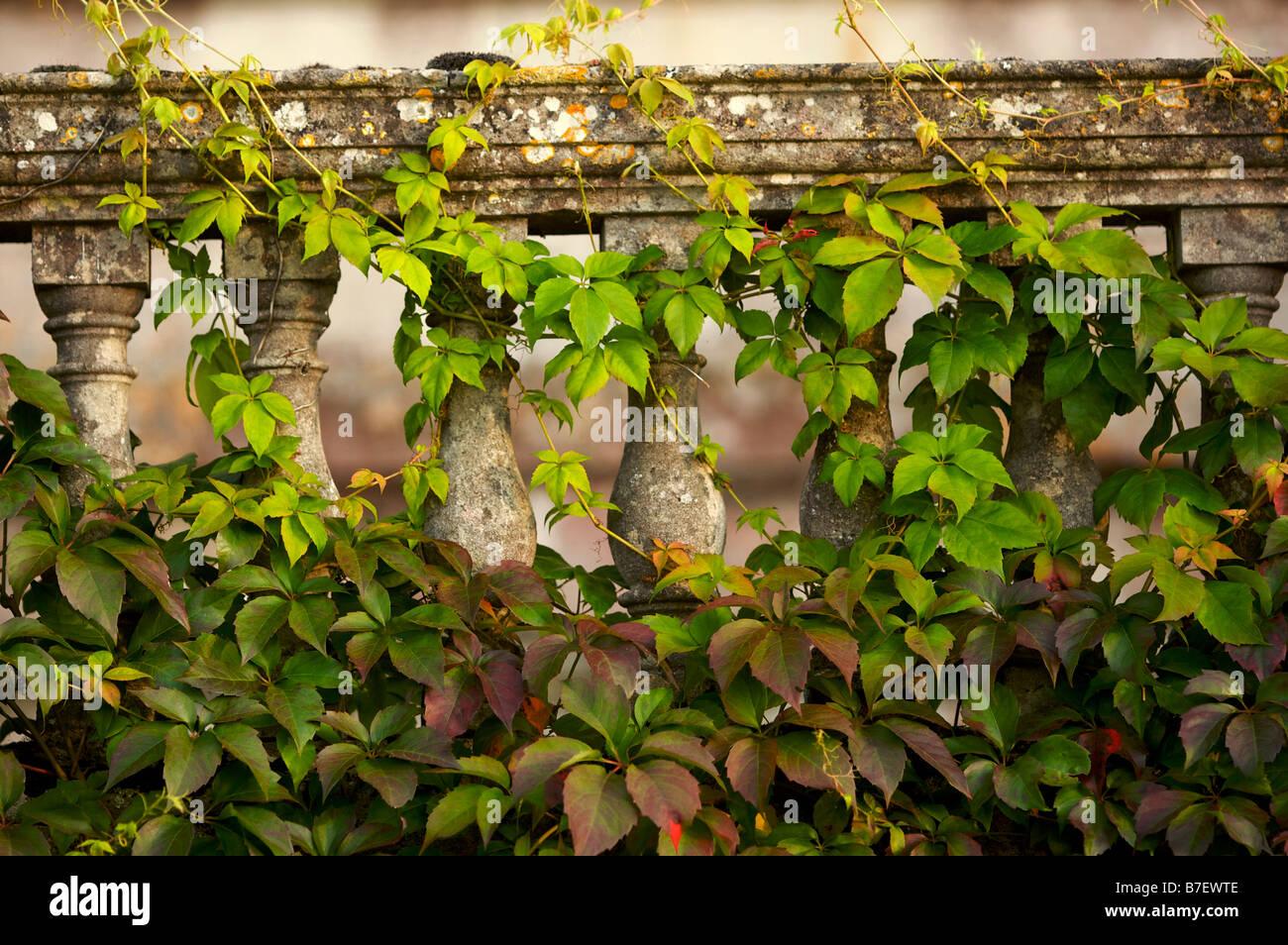 Efeu wächst auf dem Geländer eines Herrenhauses aus dem 18. Jahrhundert in Großbritannien Stockbild