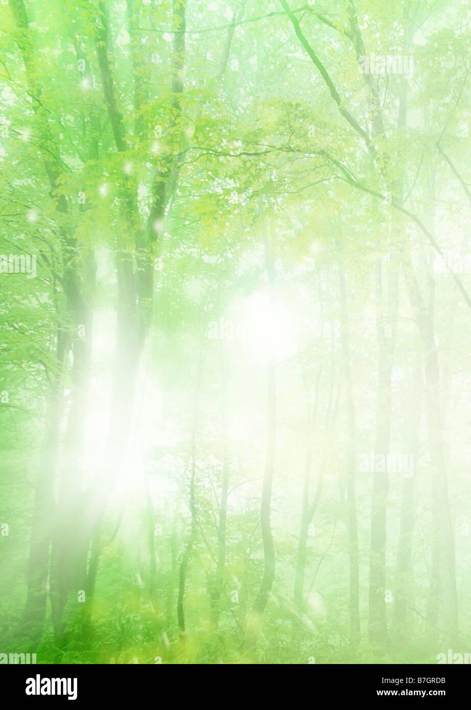 Sonnenstrahlen, die durch Bäume Stockbild