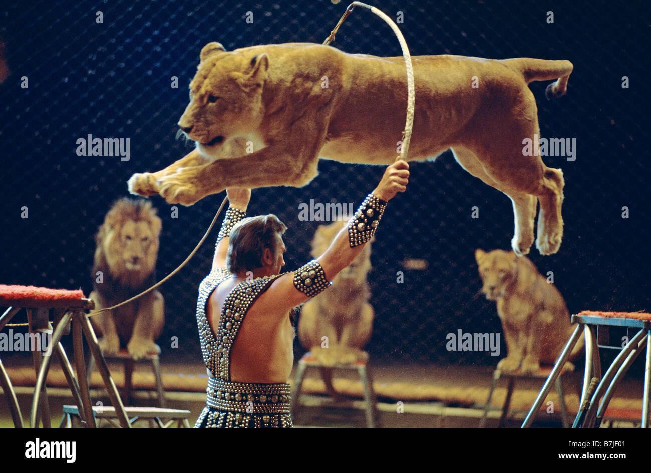 Löwen Zähmen