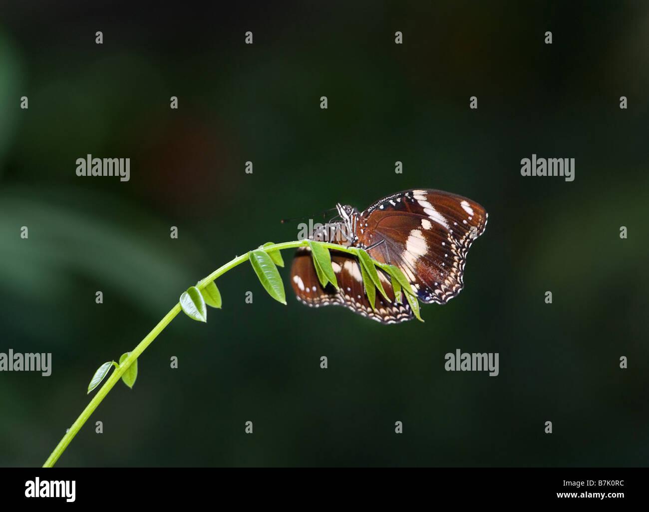 tolles Bild von einen wunderschönen Schmetterling am Ende eines Zweiges Stockbild