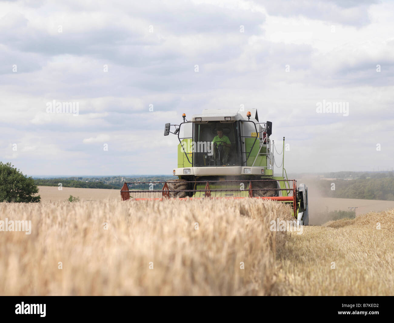 Mähdrescher im Weizenfeld Stockfoto
