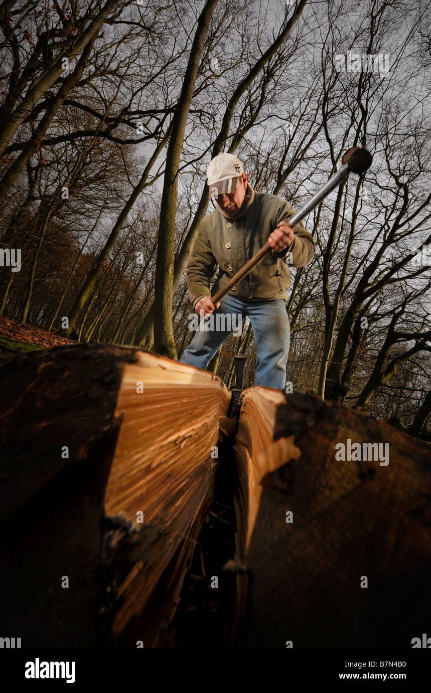 Die Aufspaltung der Edelkastanie protokolliert wird verwendet, um einen Spalt Sussex Zaun in der traditionellen Stockbild