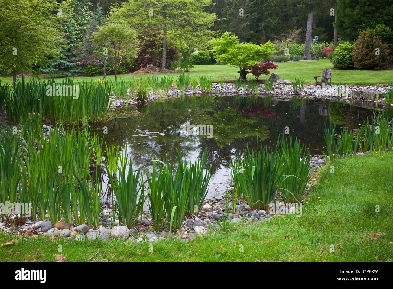 Vashon Island, WA: Pacific Northwest Gartenteich mit gelben Flagge Iris entlang der Ränder Stockbild