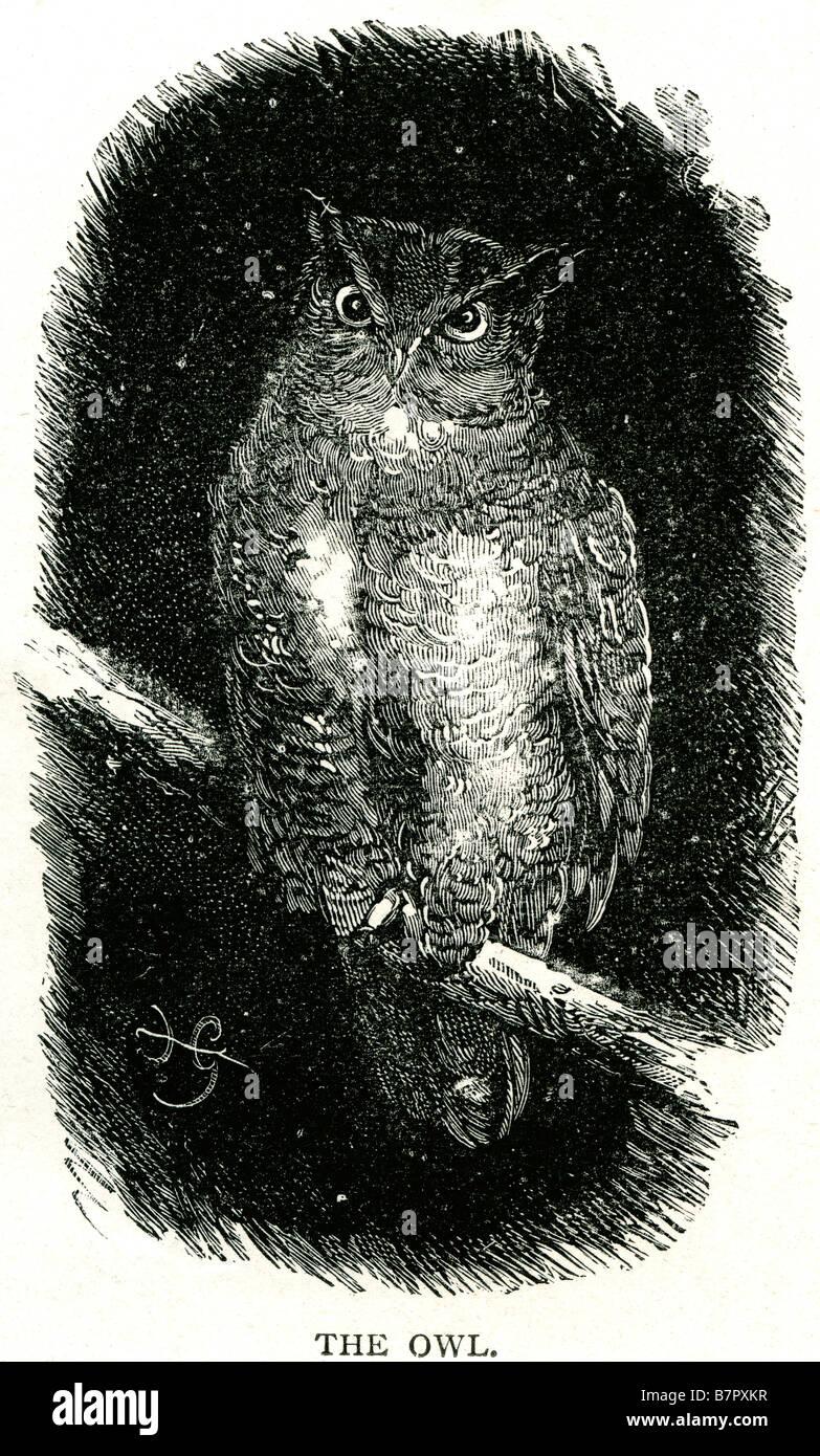 Eule Sitzstangen Zweig nächtliche Tierwelt Vogel Natur Stockbild