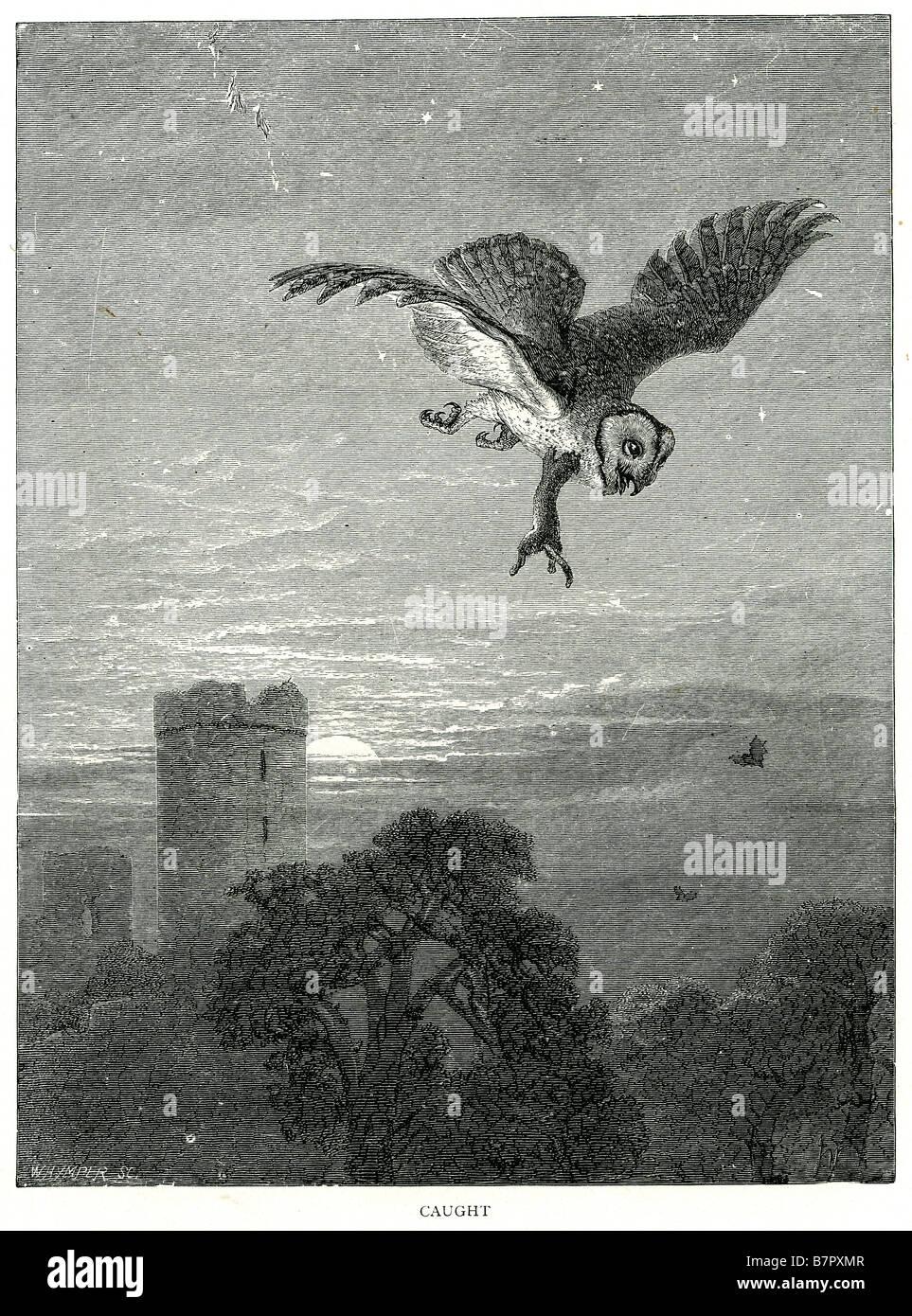 Eule Himmel Vogel fliegt Sonnenuntergang Sonnenaufgang Burg Bäume außerhalb Beute Hermelin Wiesel Dämmerung Stockbild