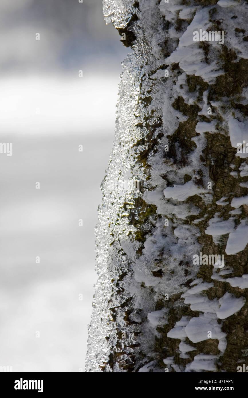 eis und schnee auf baumrinde stamm klima im winter vertikale 90171 echaillon stockfoto bild. Black Bedroom Furniture Sets. Home Design Ideas