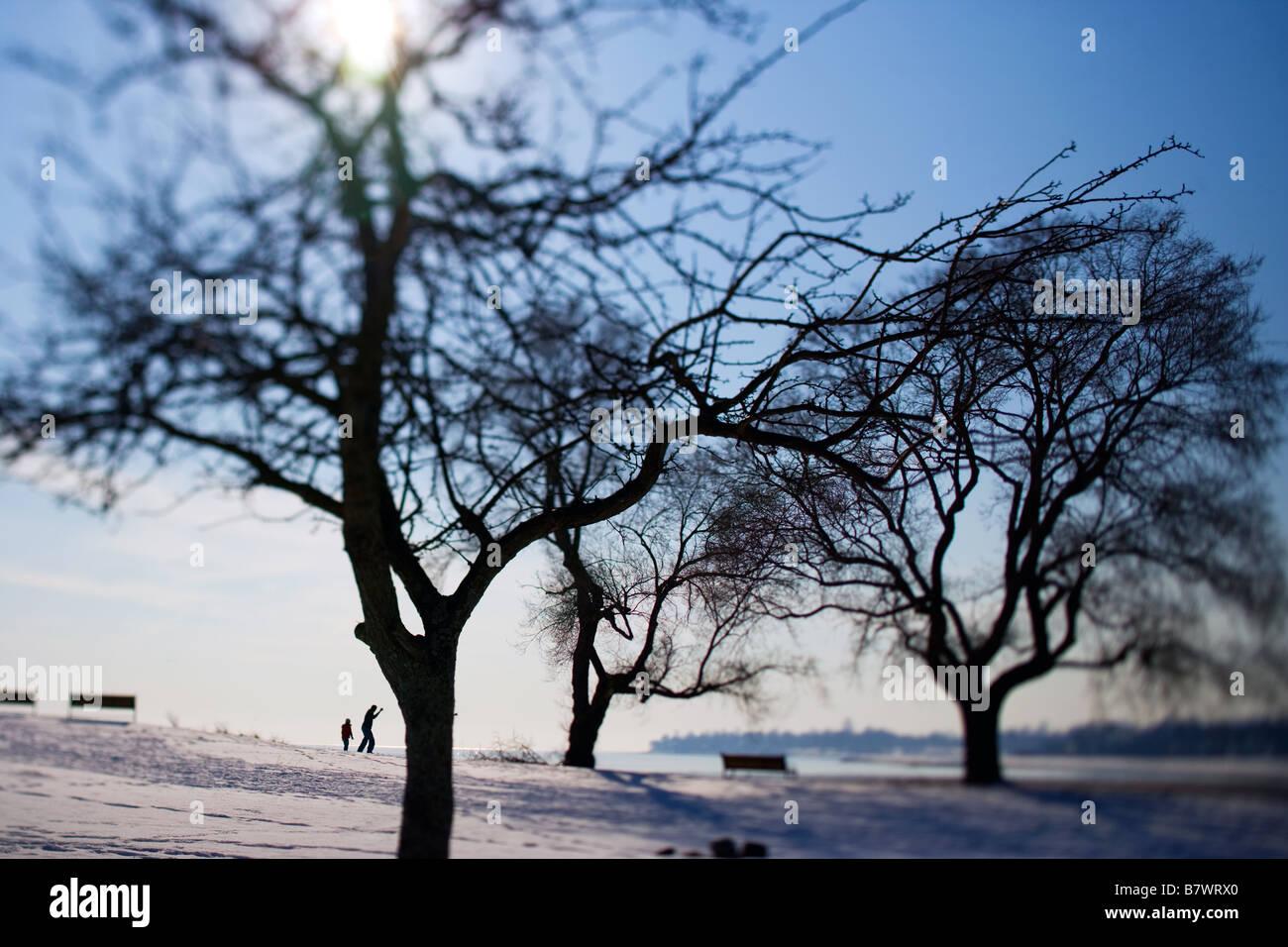 Bäume in einem Park mit Vater und Sohn überspringen Felsen in West Haven CT USA im Winter mit Schnee Stockbild
