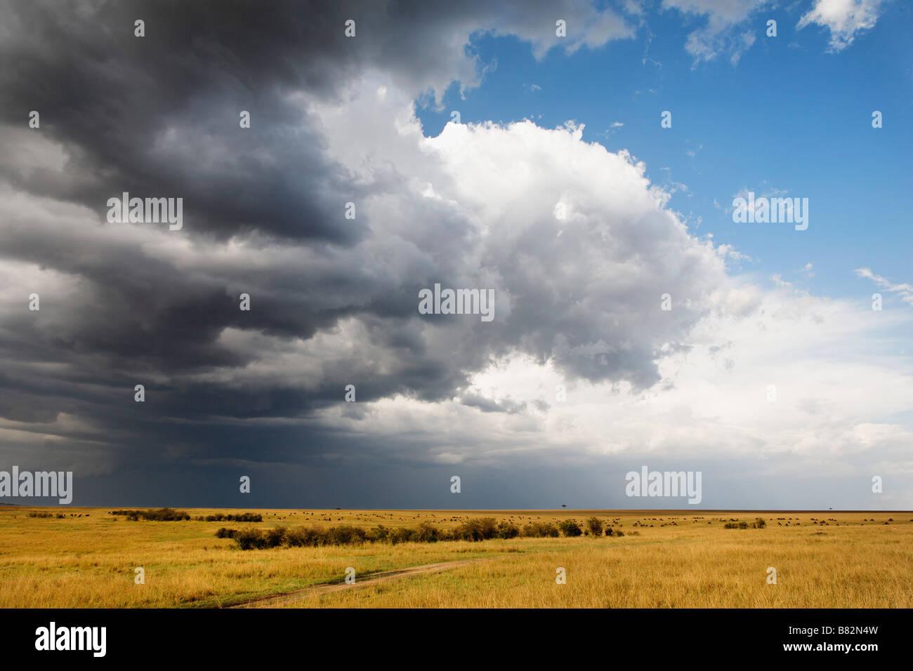 Gewitterwolken ziehen über die große weiten Ebenen der Serengeti in die Masai Mara Reserve, Kenia. Stockbild