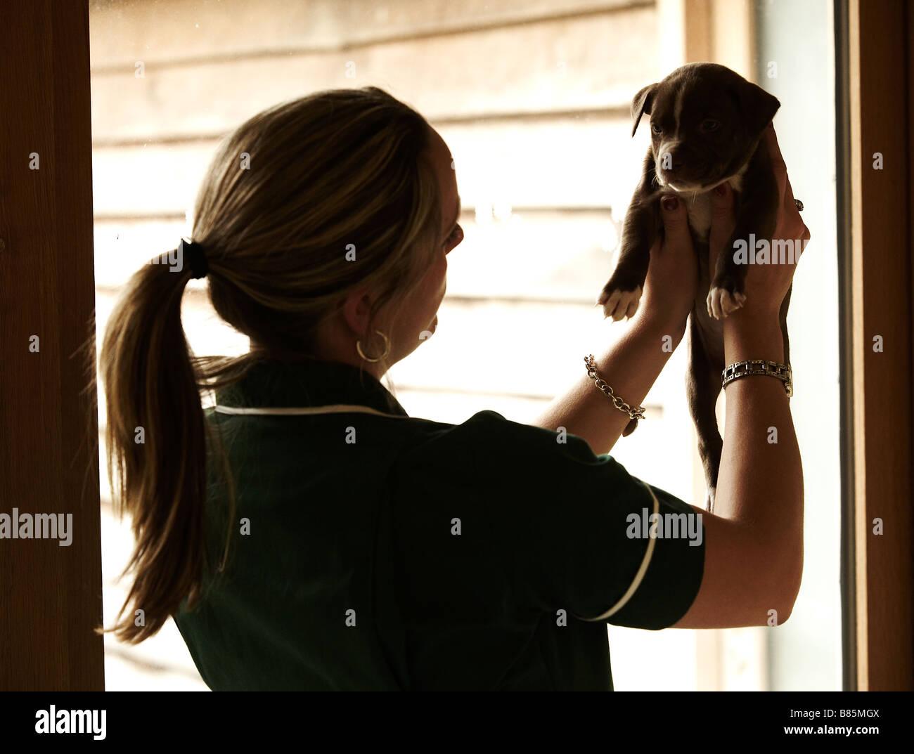 Krankenschwester mit Welpen Stockbild