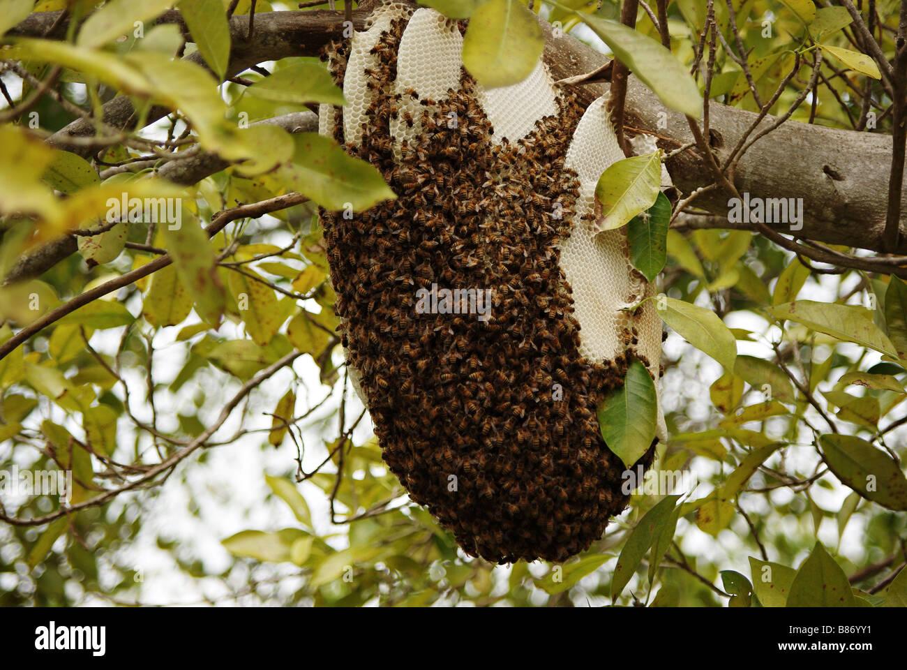wild bees stockfotos wild bees bilder alamy. Black Bedroom Furniture Sets. Home Design Ideas