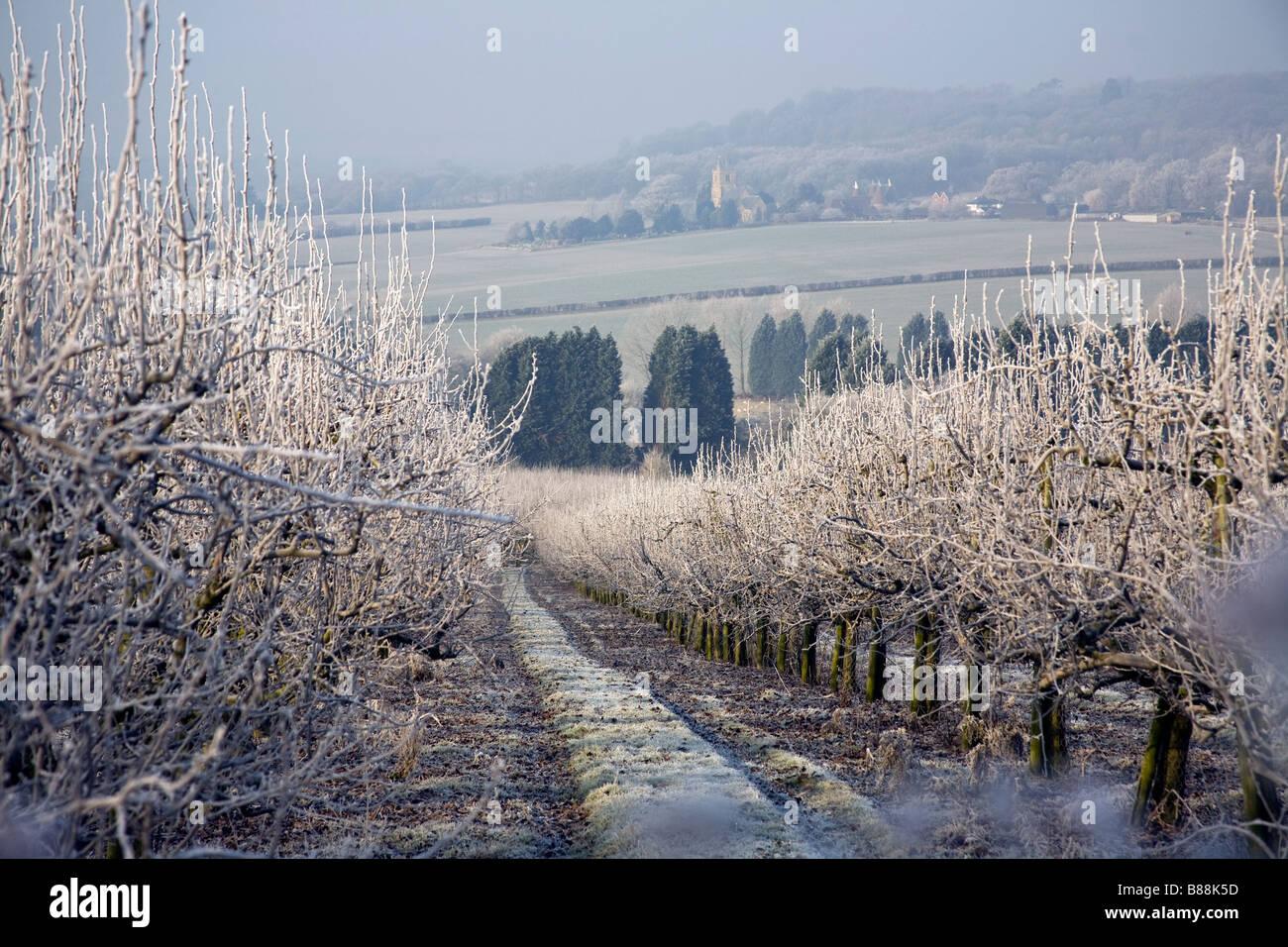 Gefrorene Obstgarten und Dorf Kirche in der Nähe von Goudhurst Kent UK Stockbild