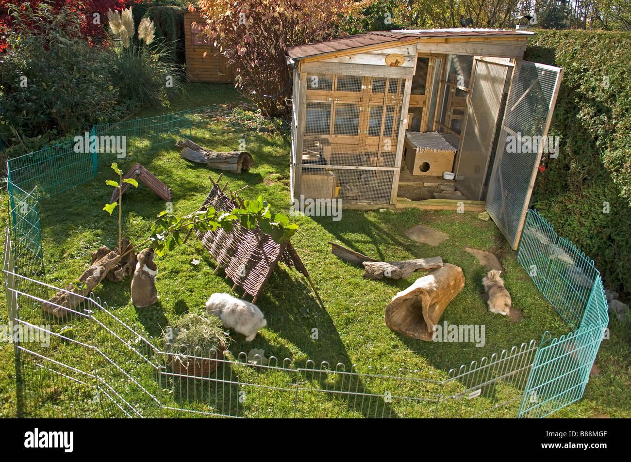 kaninchen im au engehege stockfoto bild 22319375 alamy. Black Bedroom Furniture Sets. Home Design Ideas