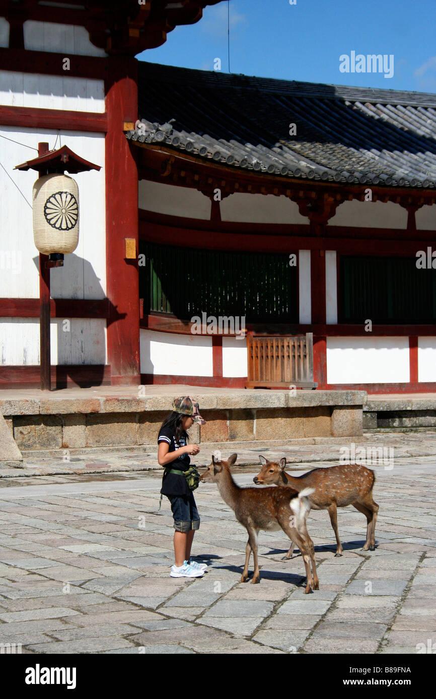 Mädchen, die Fütterung von zwei zahme Hirsche außerhalb Todai-Ji-Tempel in Nara Stockbild