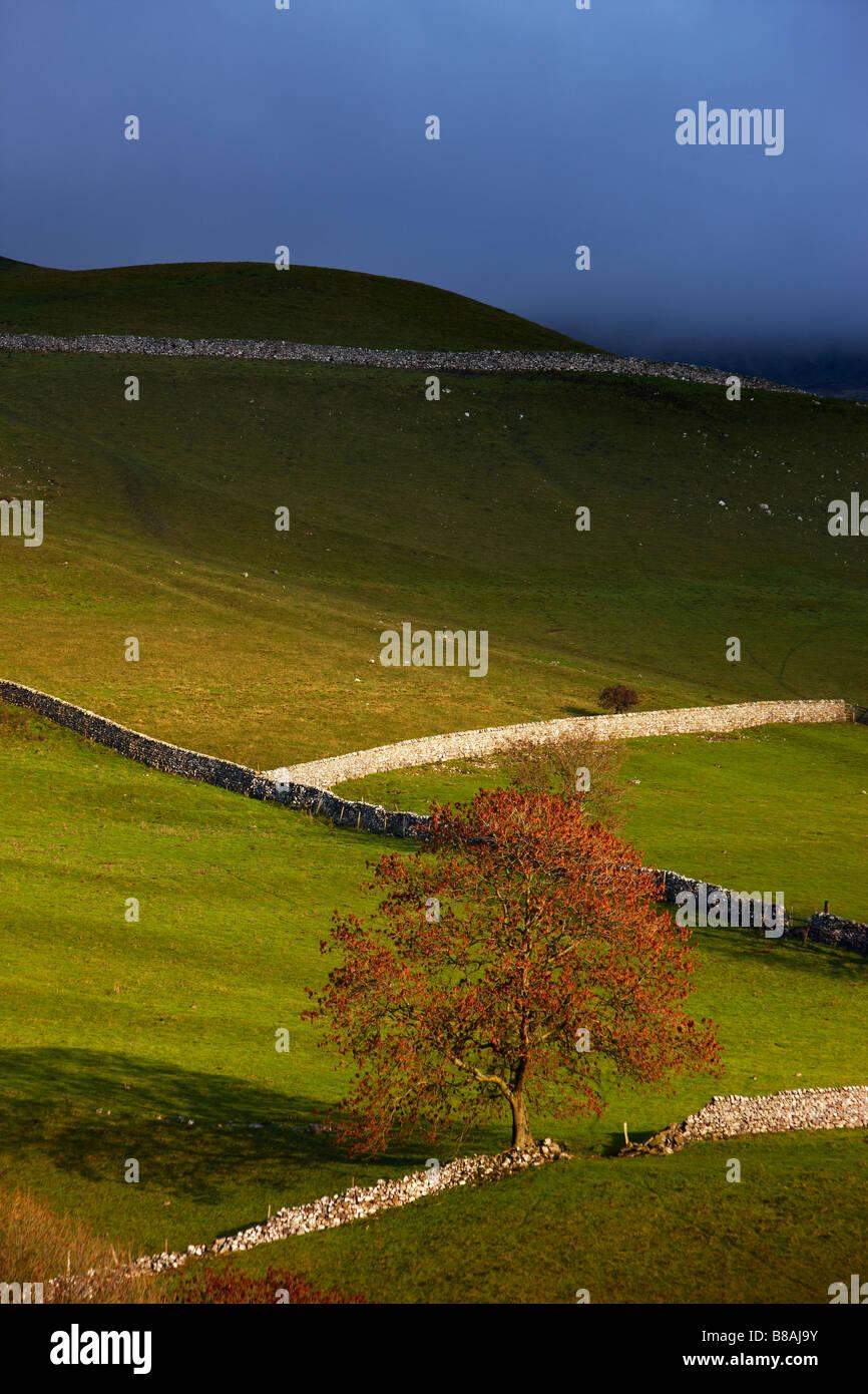 steinernen Mauern und Scheunen Nr. Kettlewell, Wharfedale, Yorkshire Dales National Park, England, UK Stockbild