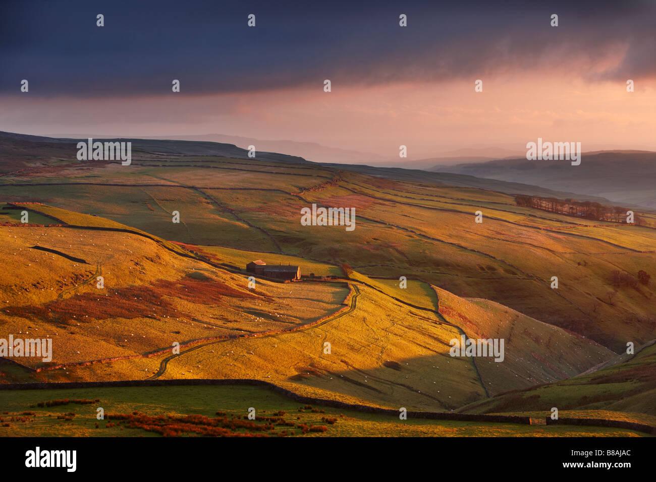 Abendlicht auf die Steinwände und Farmen von Wharfedale, nr Kettlewell, Yorkshire Dales National Park, England, Stockbild