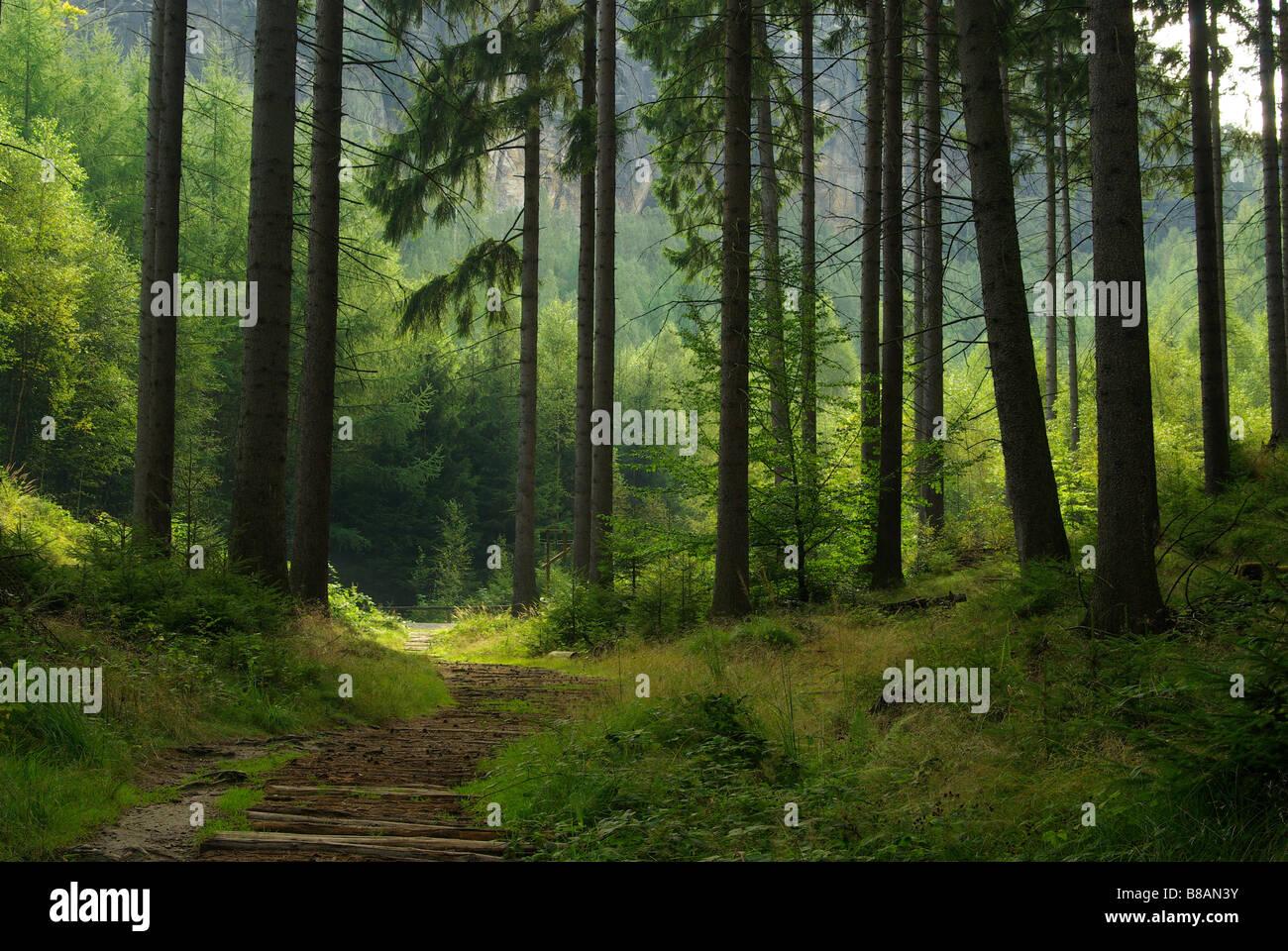 Wald-Wald 48 Stockbild