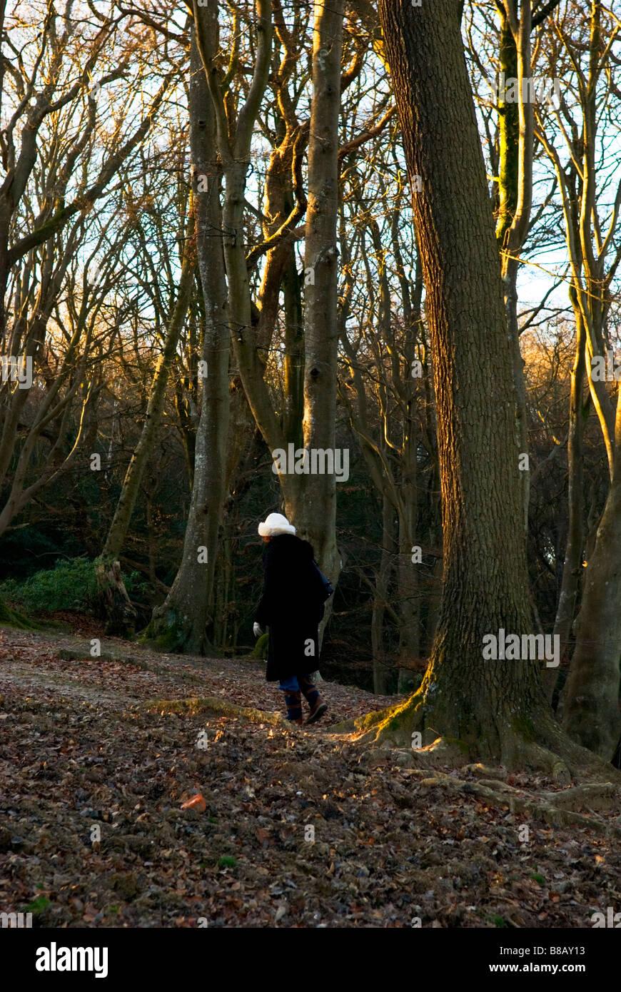 eine weibliche Walker mit weißen Hut geht weg in einem herbstlichen New Forest in Großbritannien Stockfoto