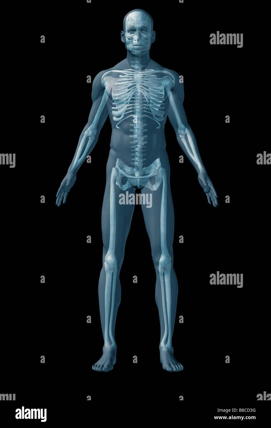Atemberaubend Bilder Der Menschlichen Anatomie Bilder - Physiologie ...