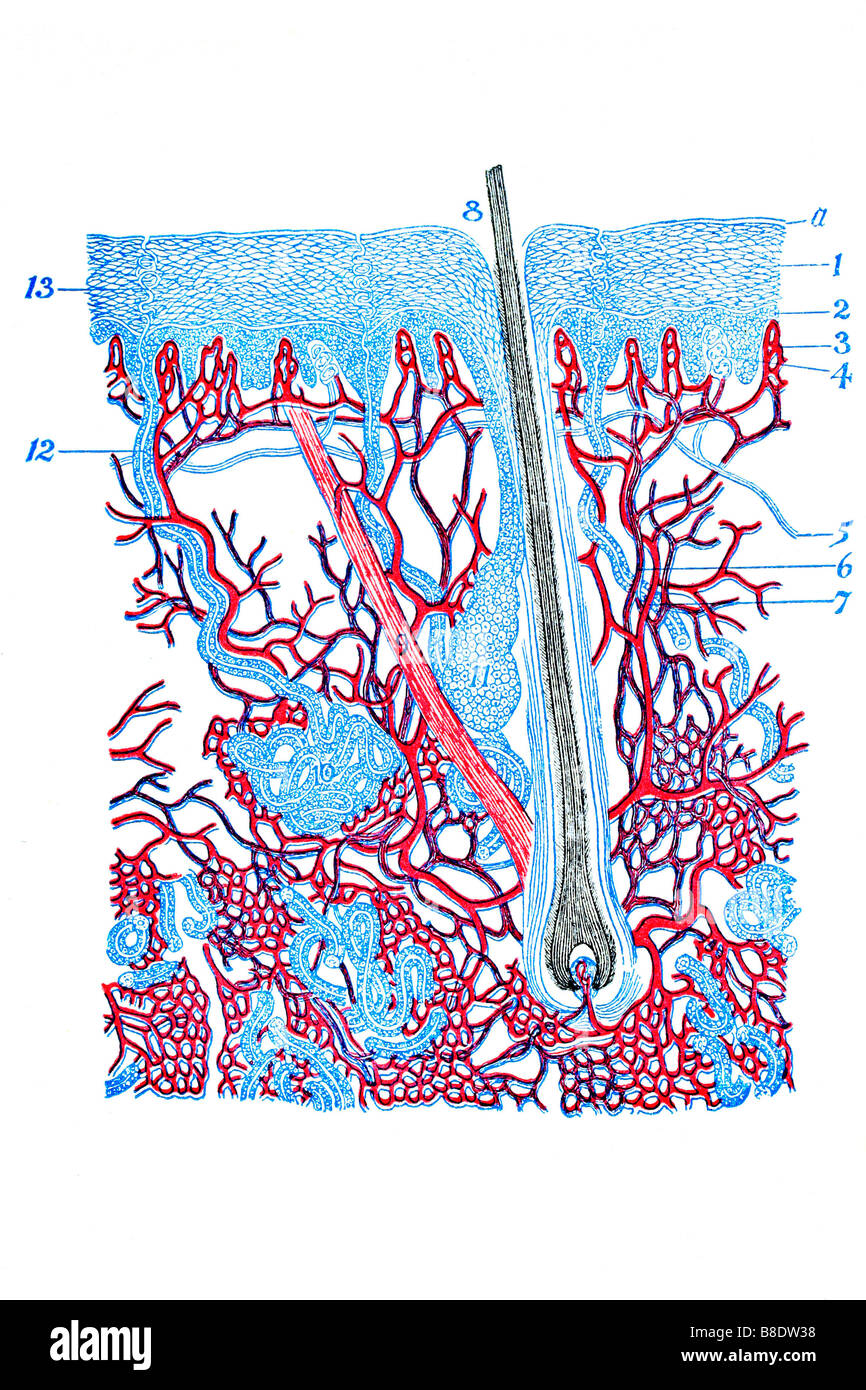 Cross Section Diagram Stockfotos & Cross Section Diagram Bilder - Alamy
