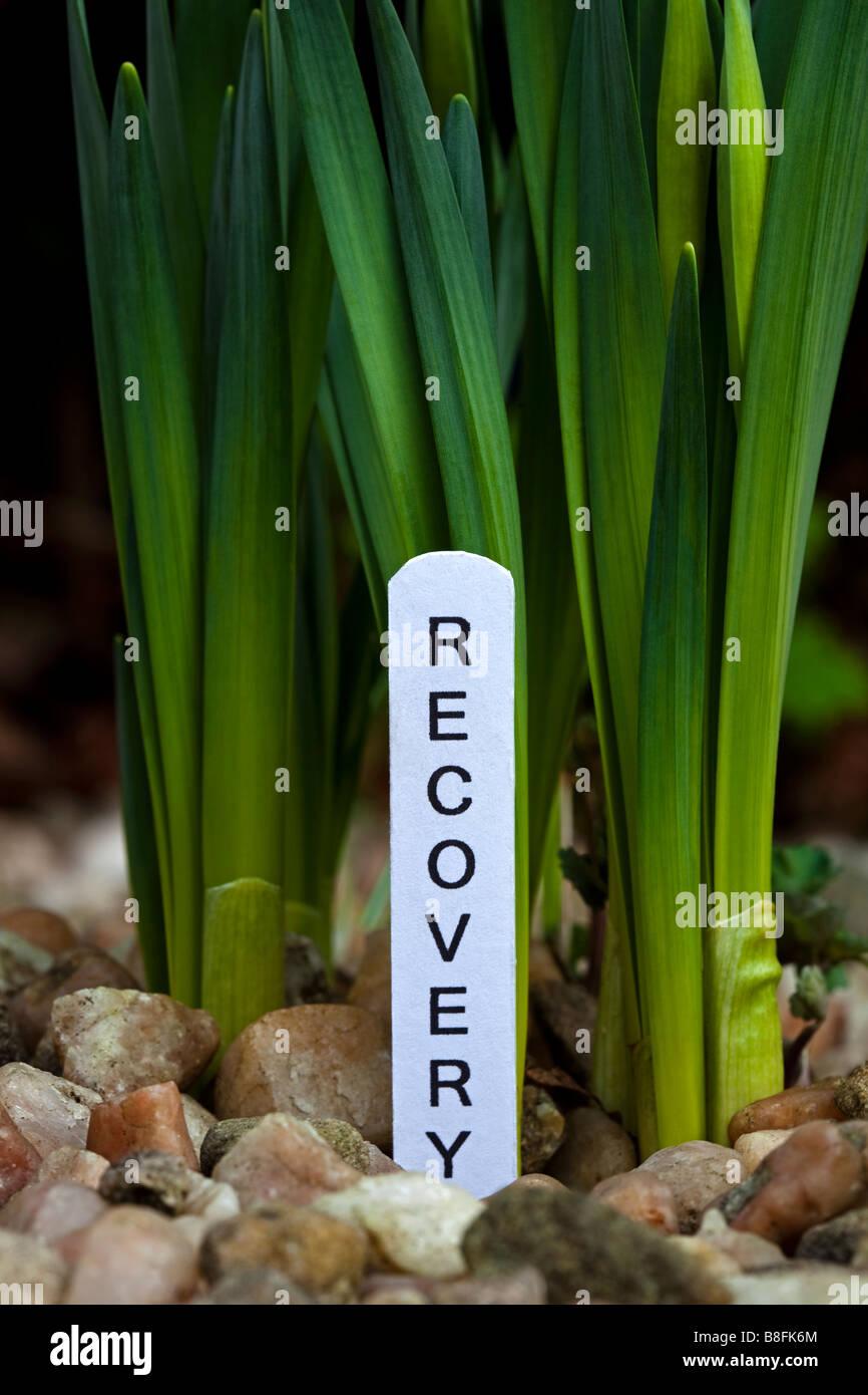 Grüne Triebe der Erholung, Konzept-Bild zur Veranschaulichung der Wiederbelebung der globalen Wirtschaft Stockbild