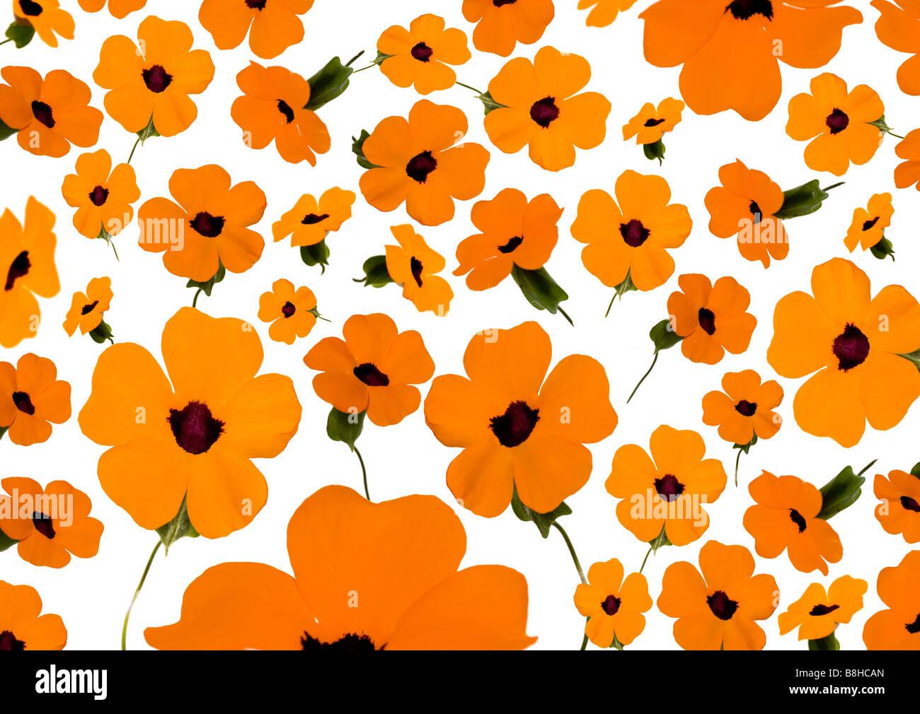 Fotomontage von orange Blumen Stockbild