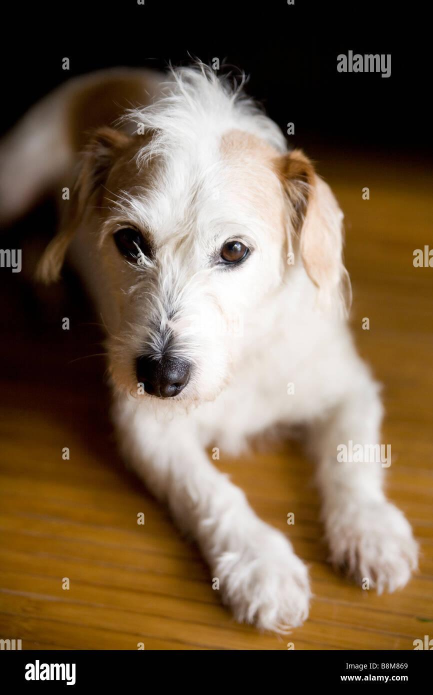 Hund liegen auf Matten im freien Stockbild