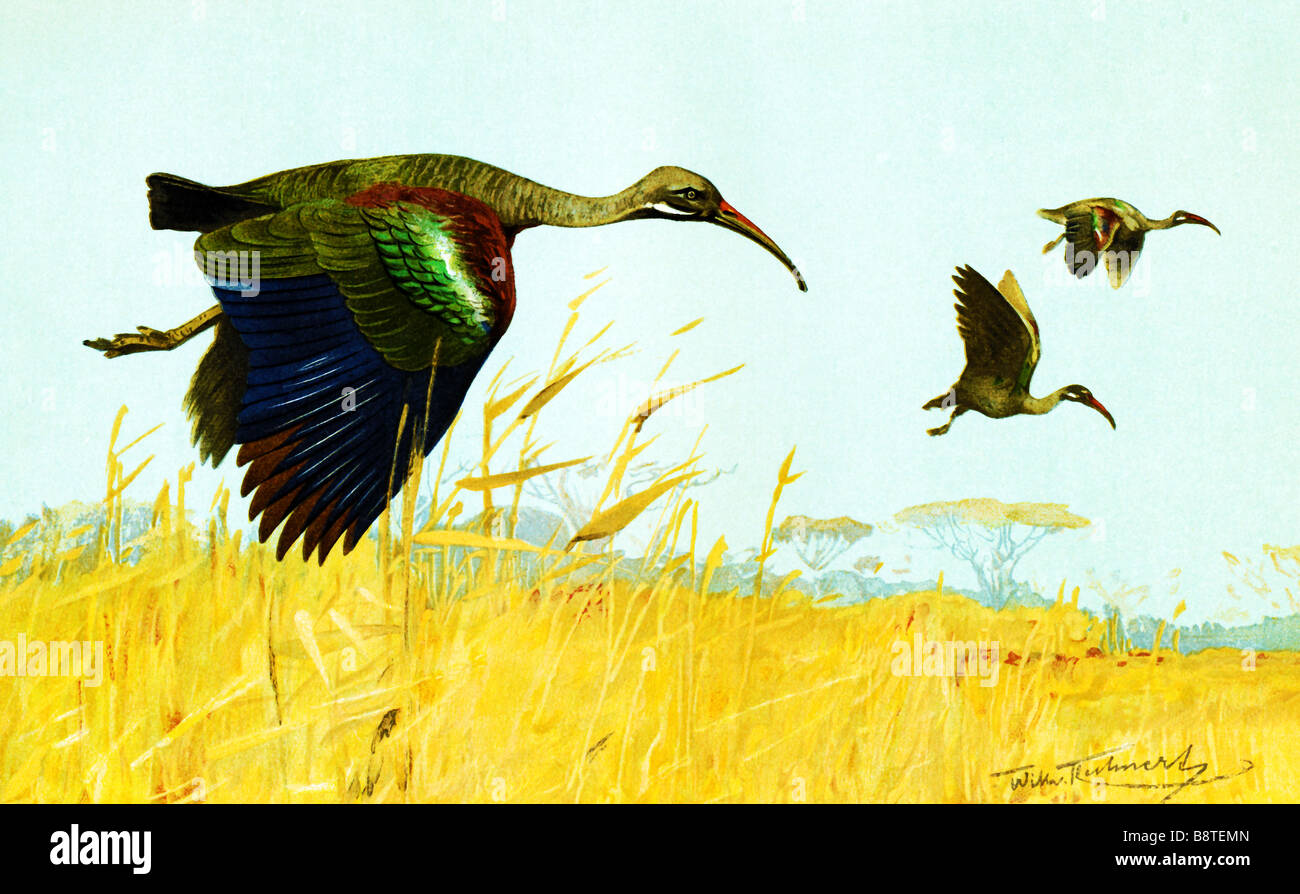 Vögel fliegen Stockbild