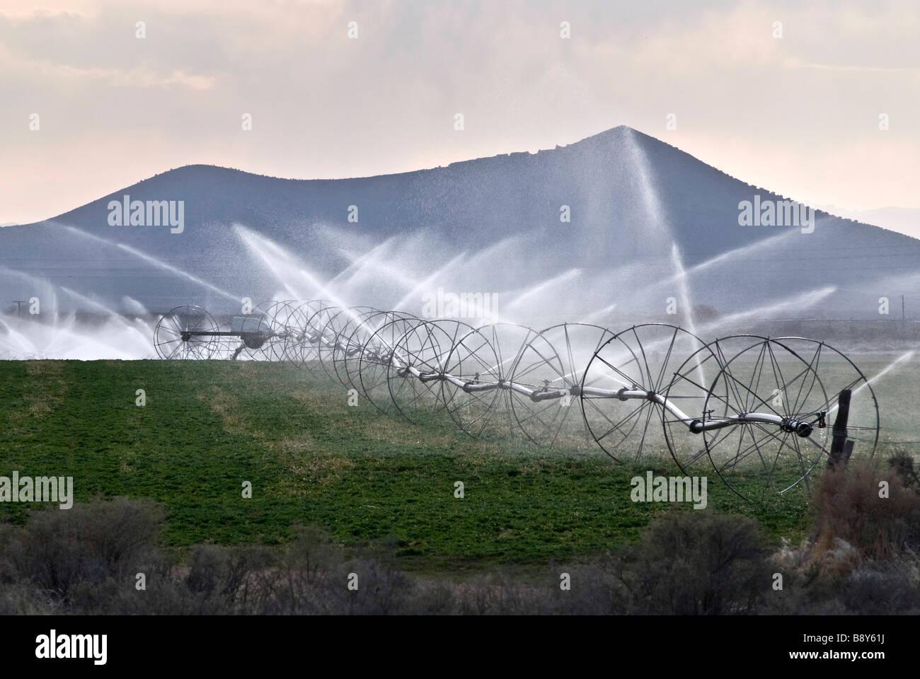Landwirtschaftliche Bewässerung in einem Feld, Nevada, USA Sprinkler Stockbild